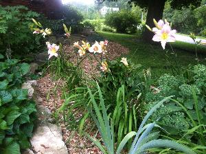 Photo - Garden